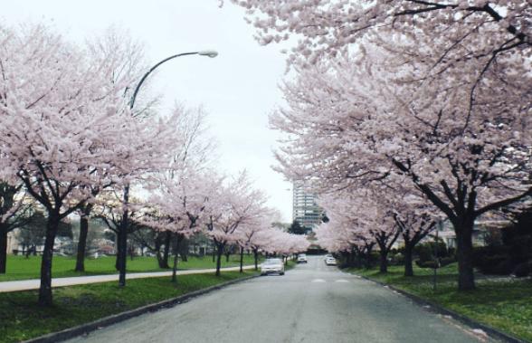 温哥华地产楼市 | 西区介绍十 | Marpole